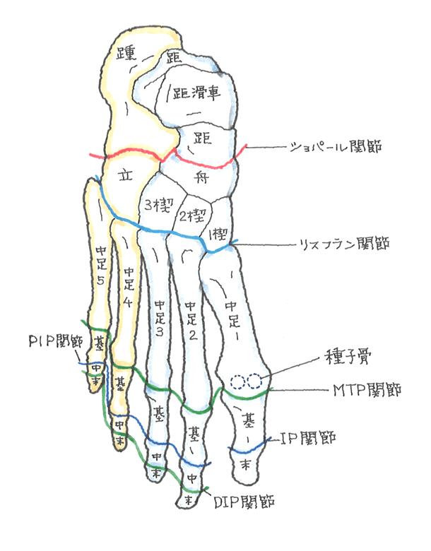 足指の切断障害