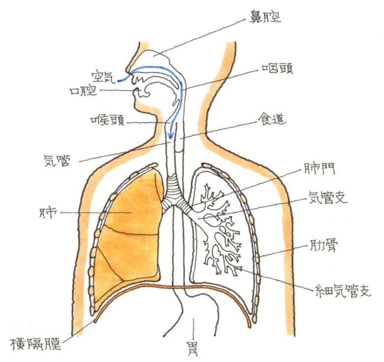 胸腹部臓器の障害