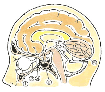 視神経の走行