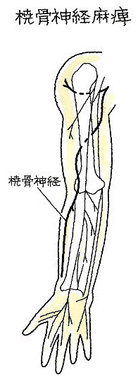 橈骨 神経 走行