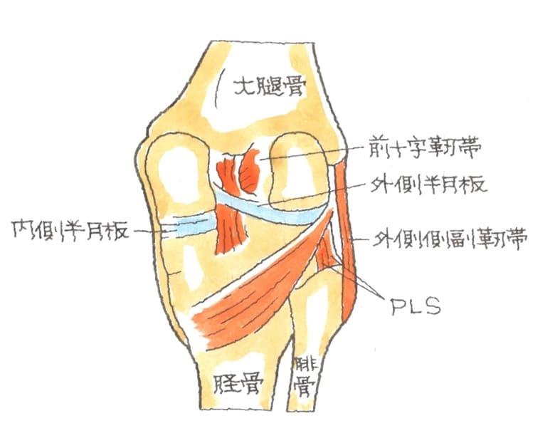 膝関節後外側支持機構損傷