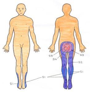 各神経の支配領域