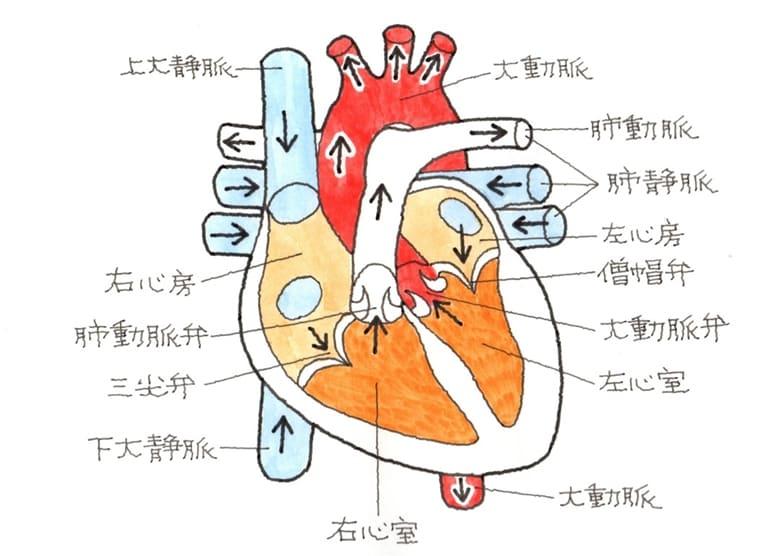 心臓、弁の損傷